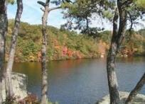 Photo of Lake surrounded by trees in Autumn colors